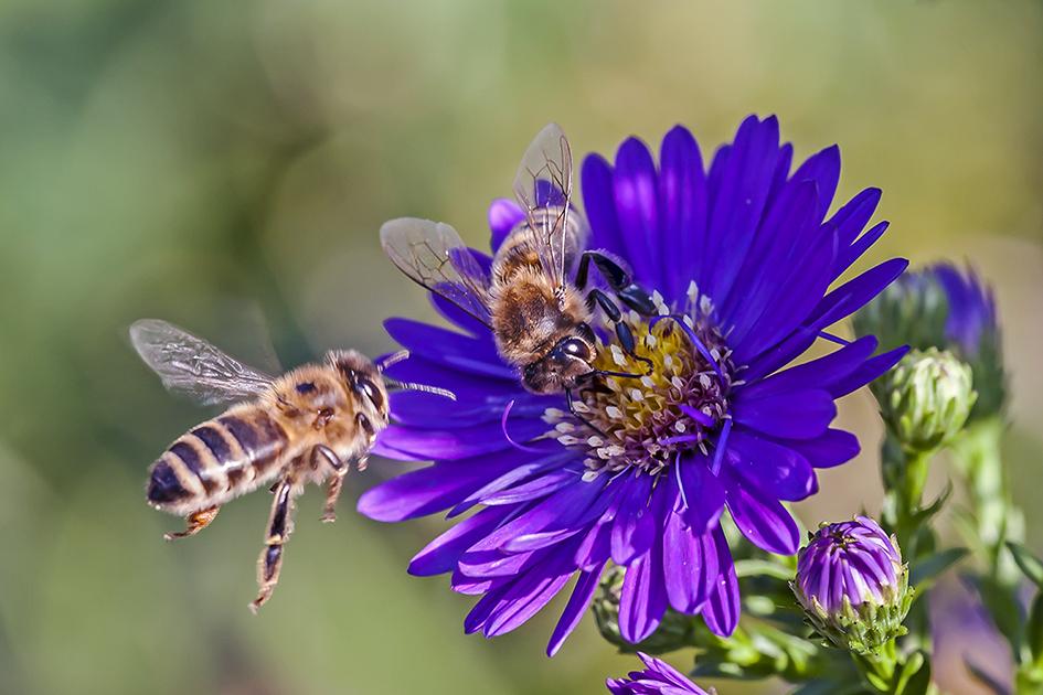 Bienenlandeplatz