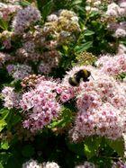 Bienenlust