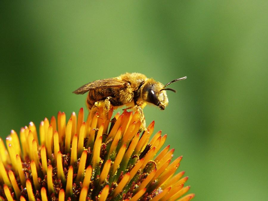 Bienenmakro 1