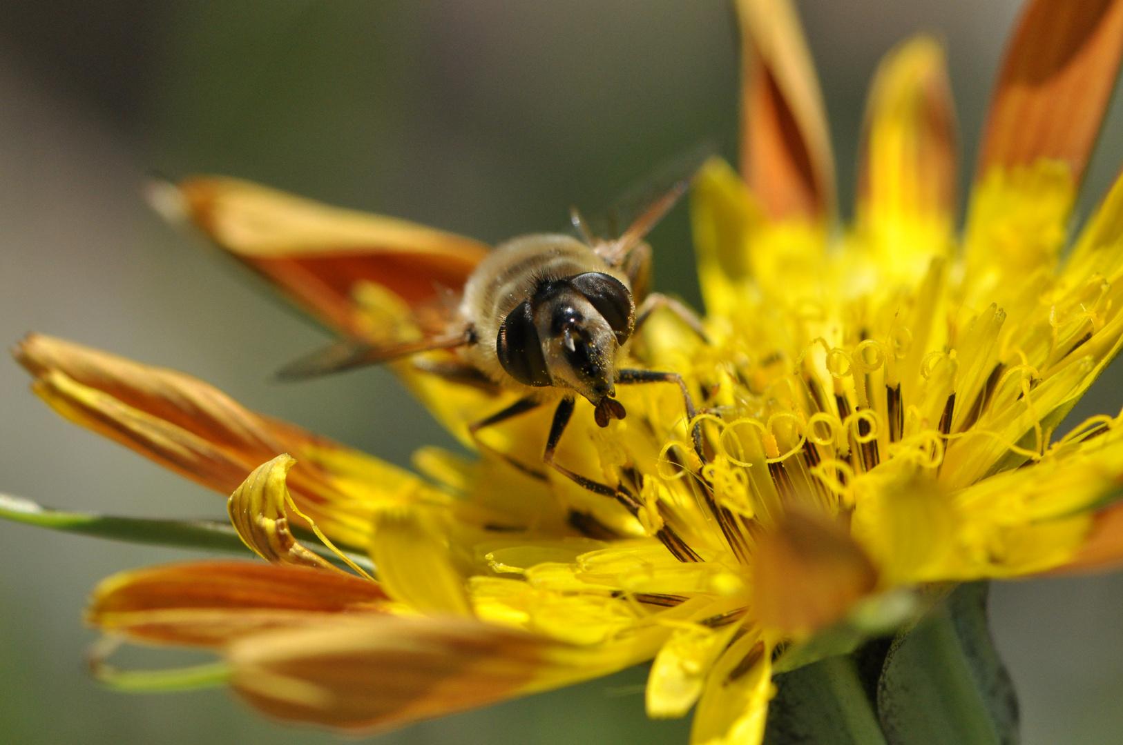 Bienenmalzeit