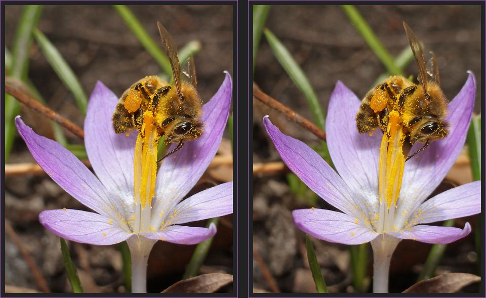Bienensaison eröffnet [3D]