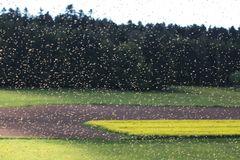 Bienenschwarm beim Abflug