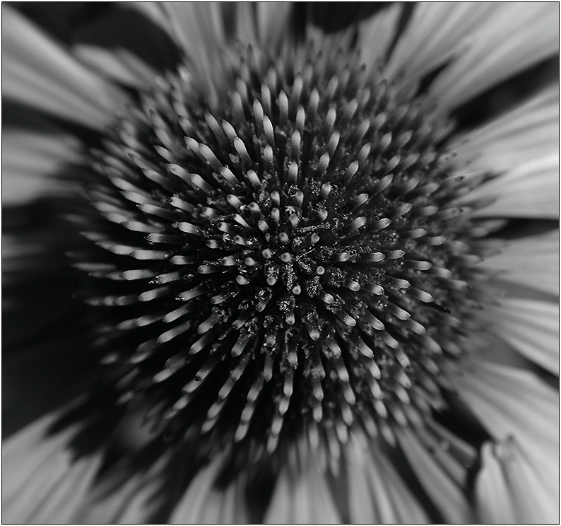 Bienensnack