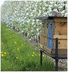 Bienenstand verkehrt