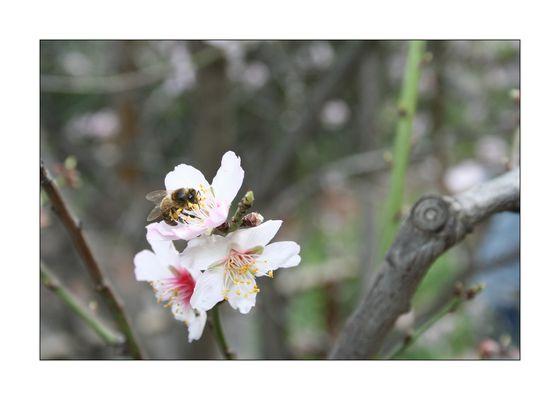 Bienenstich mit Mandelsplitter