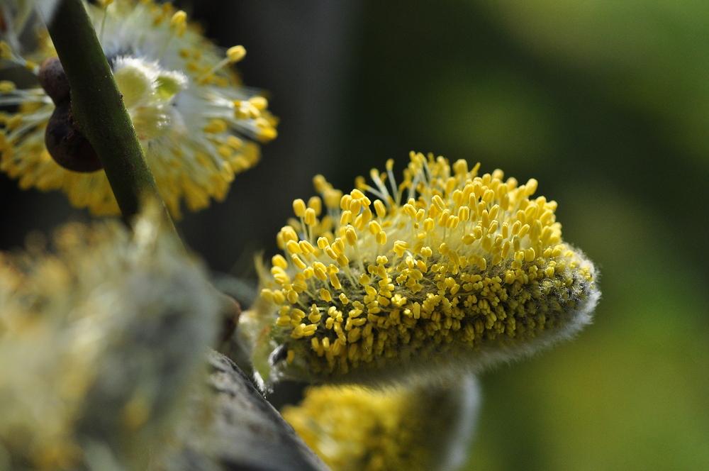 ..........:::::::::::::::::: Bienenweide ohne Biene :::::::::::::::::.........