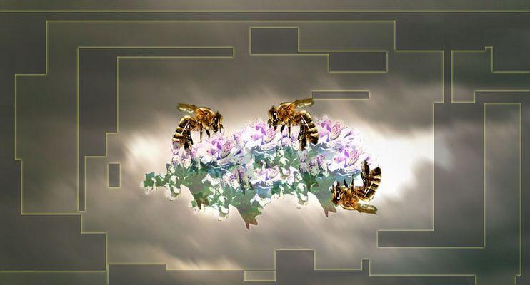 Bienenwolke