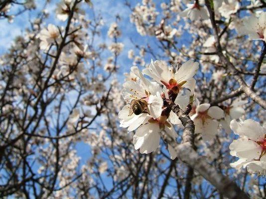 Biensche und Blütle