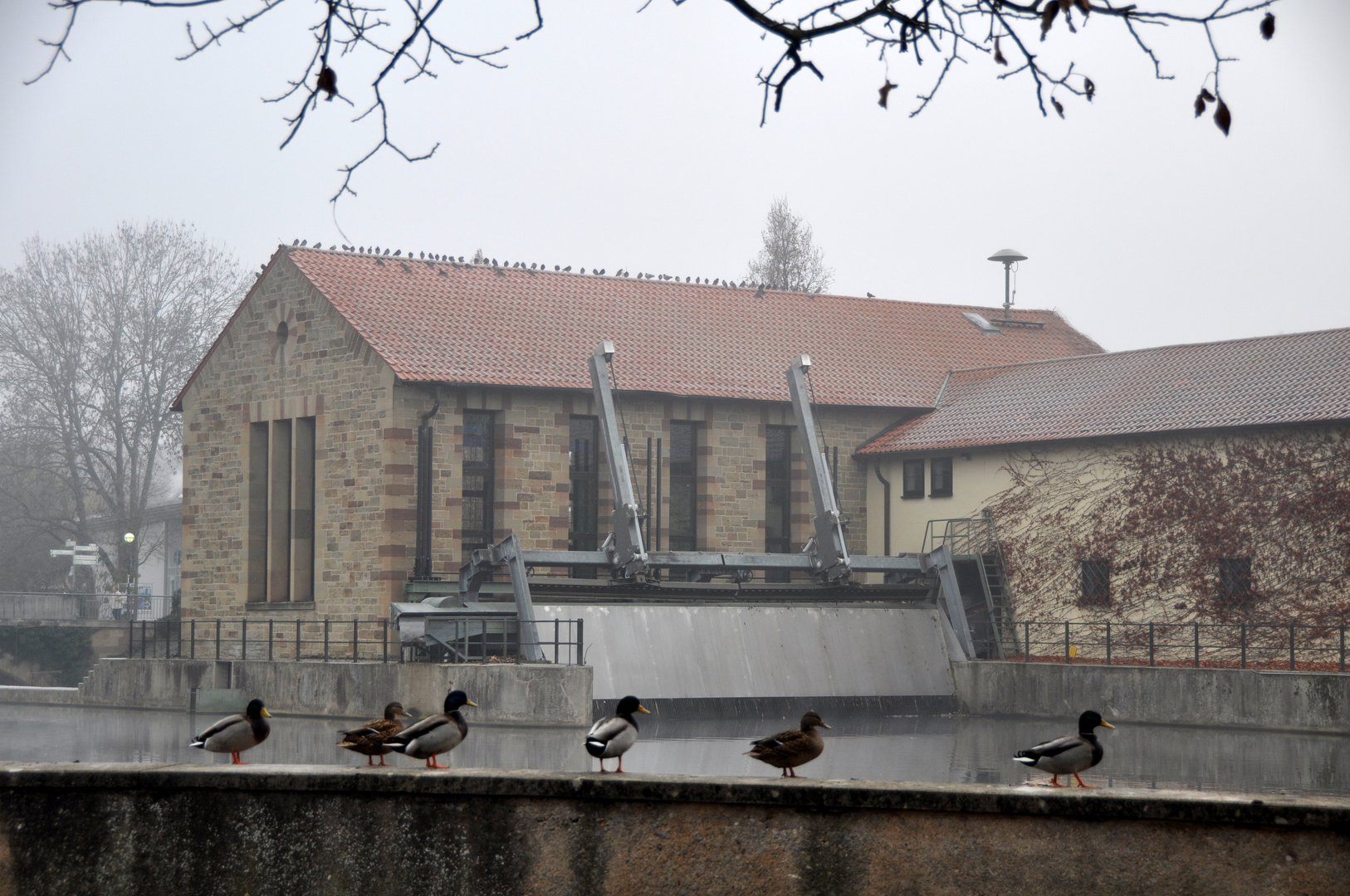 Bietigheim-Bissingen - Entenblick