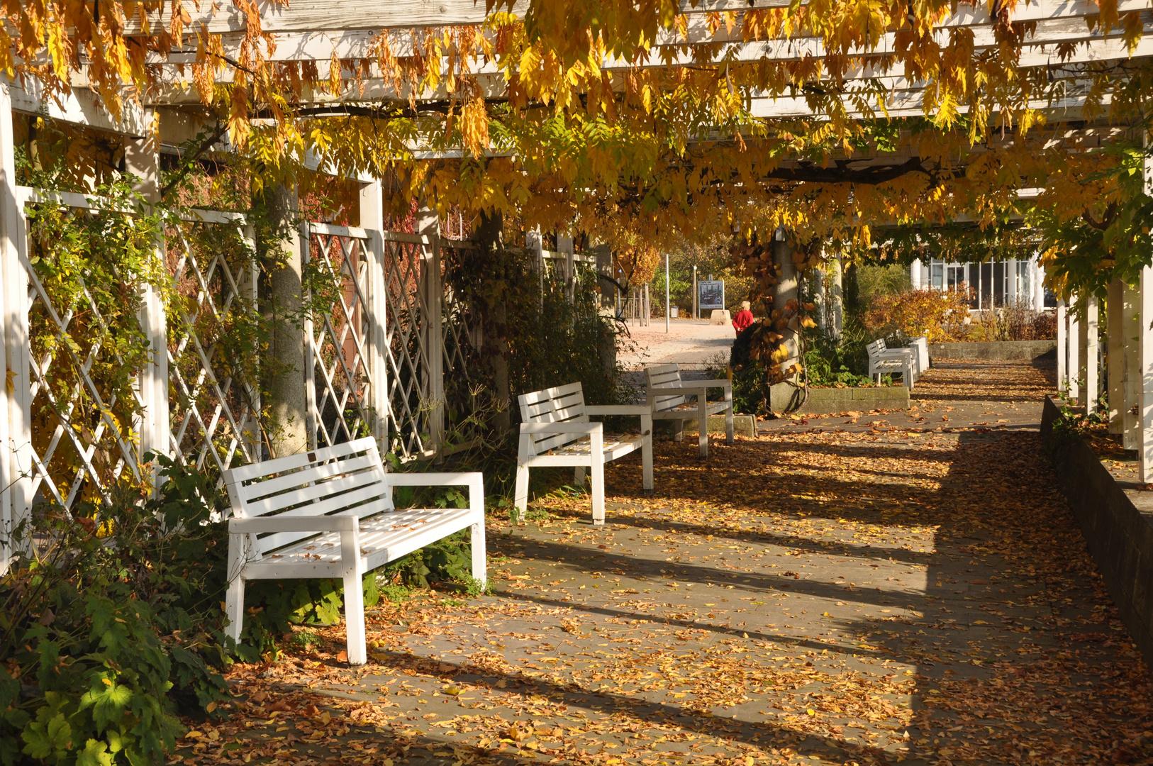 Bietigheim-Bissingen / Herbst im Bürgergarten