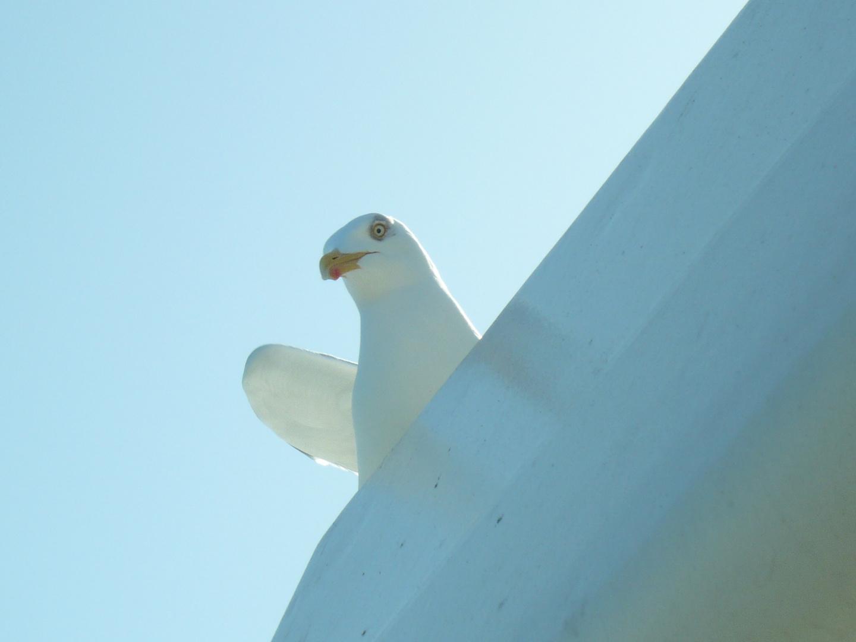 Big bird is watching you