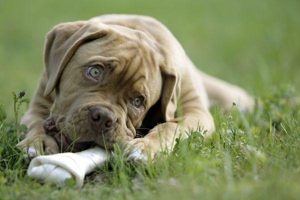 ...big bone...