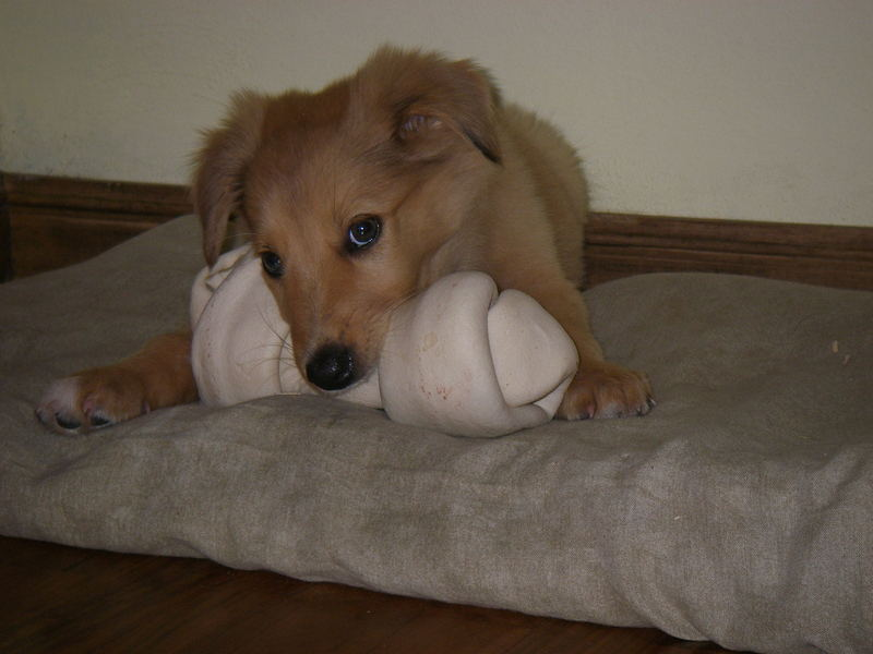 big bone, small dog