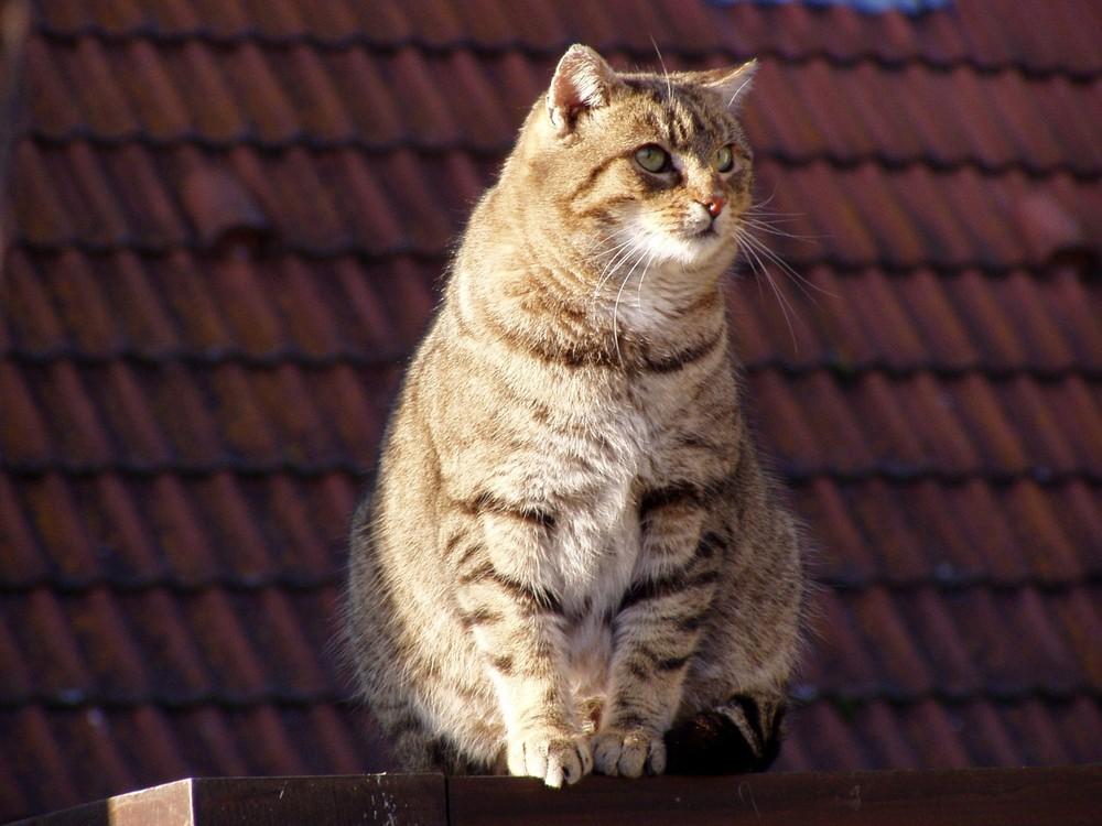 Big -Cat