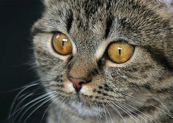 --big eyes--