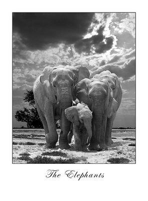 Big Five Elephants