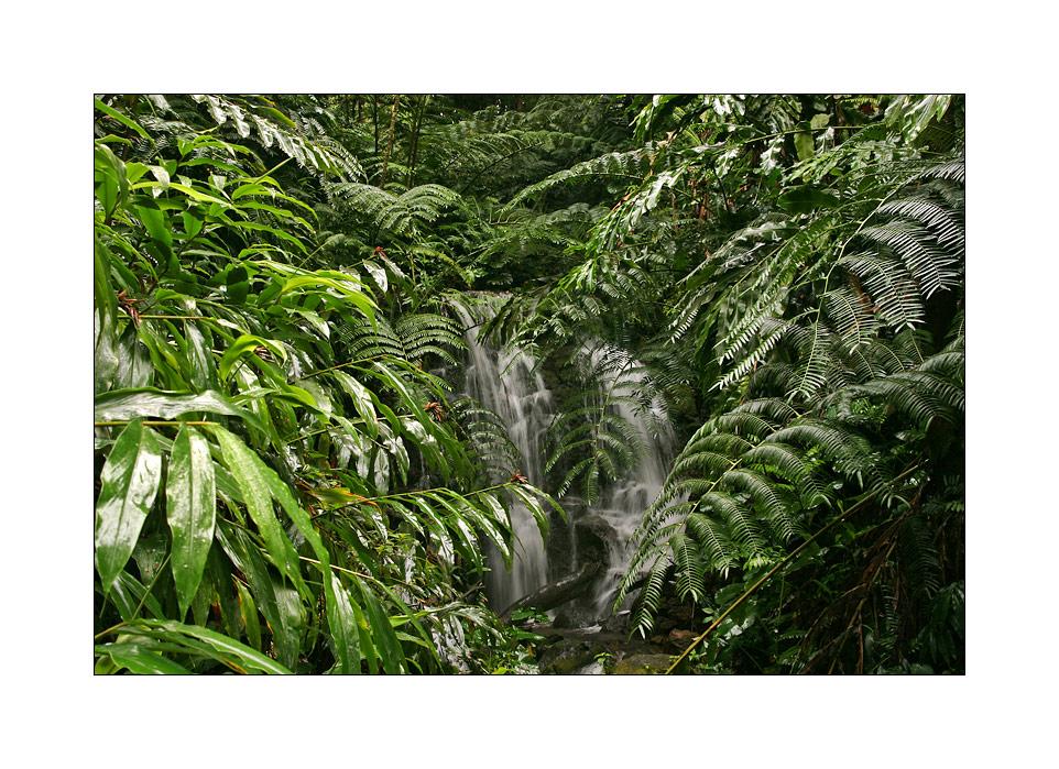 Big Island Jungle