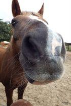 """Big Nose"""