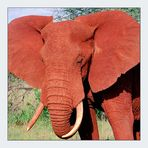 Big red elephant