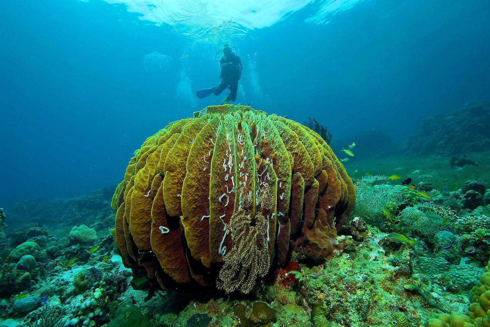 big sponge