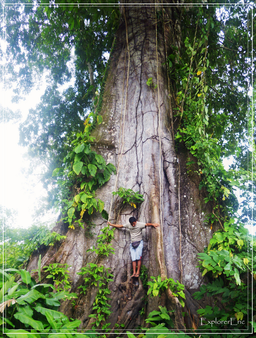Big Tree...............