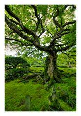 Big tree and moss
