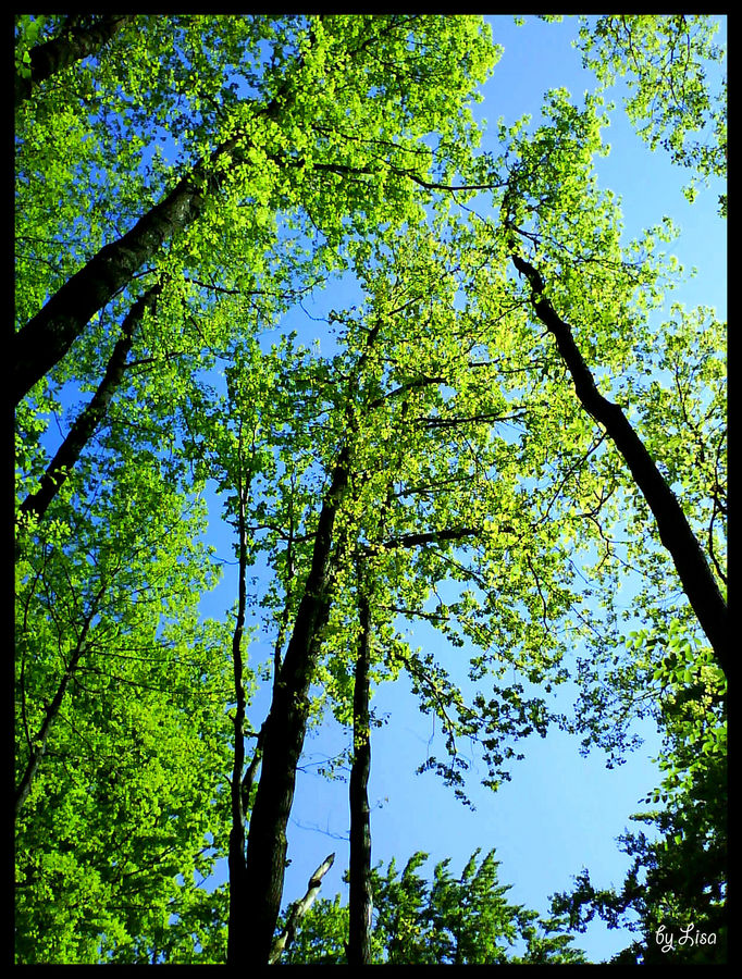 *big trees*