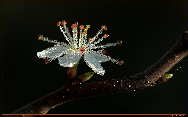 Bijou de printemps