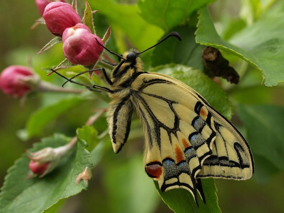 bijou nature