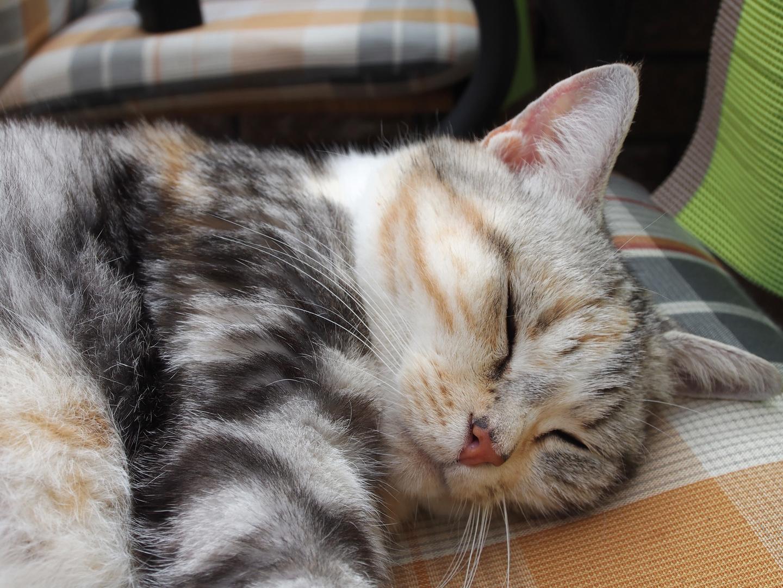 Bijou schläft