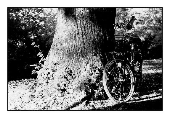 Bike Fascination #1