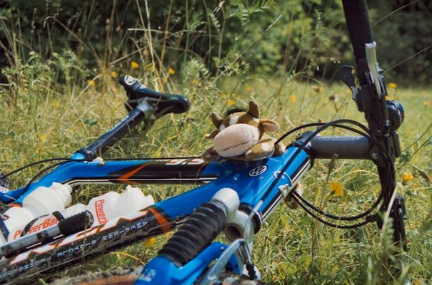 Bike mit Kuh II