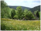 Biken im Schwarzwald