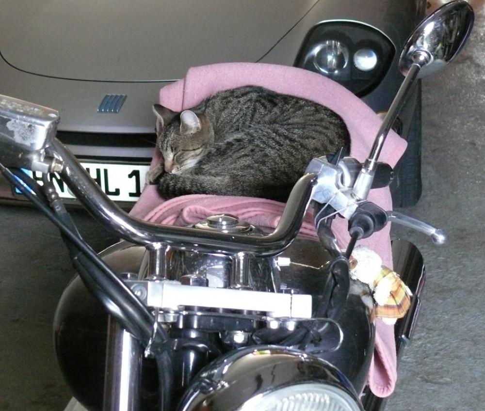 Biker -Tiger