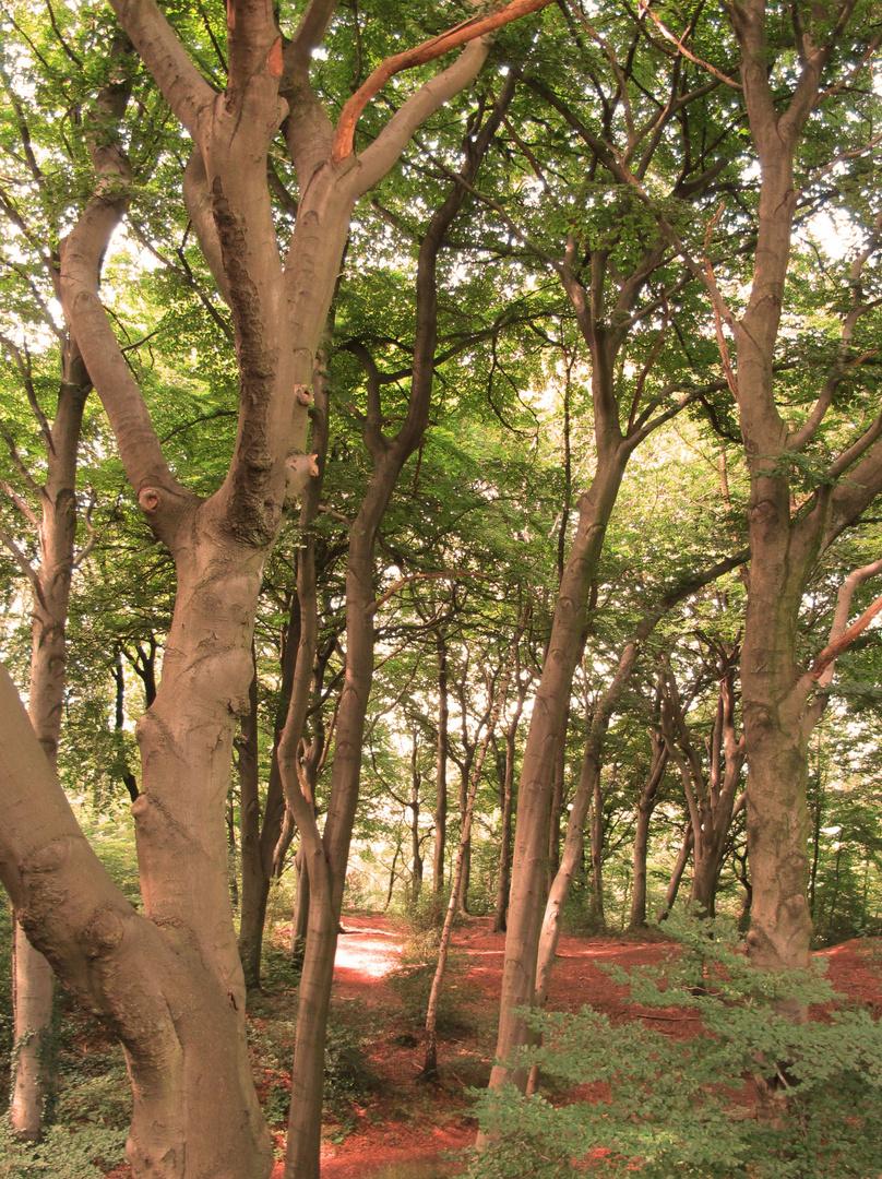 Bild 1: Waldstück vom Reha-Zentrum in Essen-Kettwig.