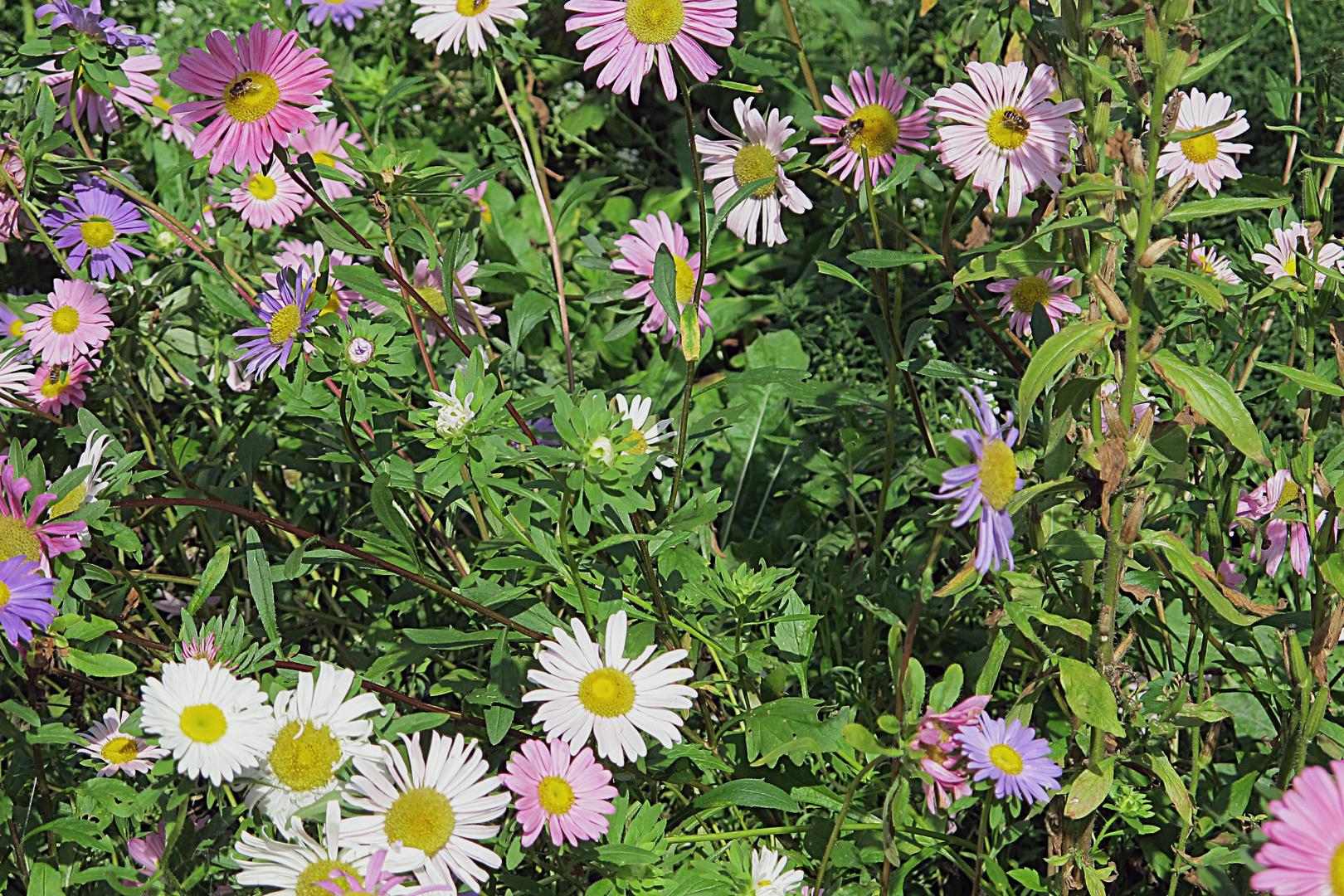 Bild 2: Bärbels Garten