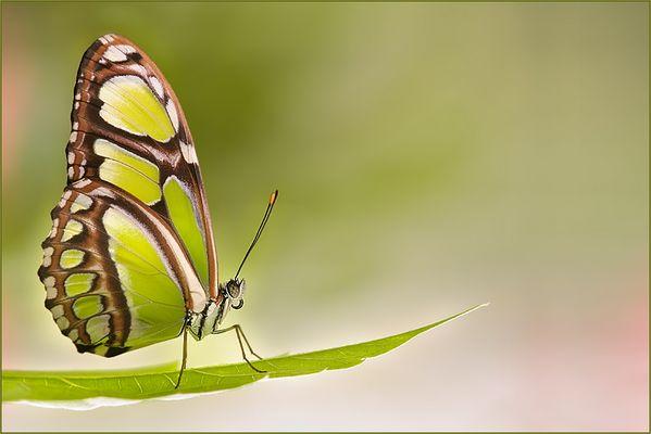 Bild der Woche - Schmetterling