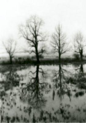 Bild mit Bäumen und einem See und Zeug das im Wasser ist