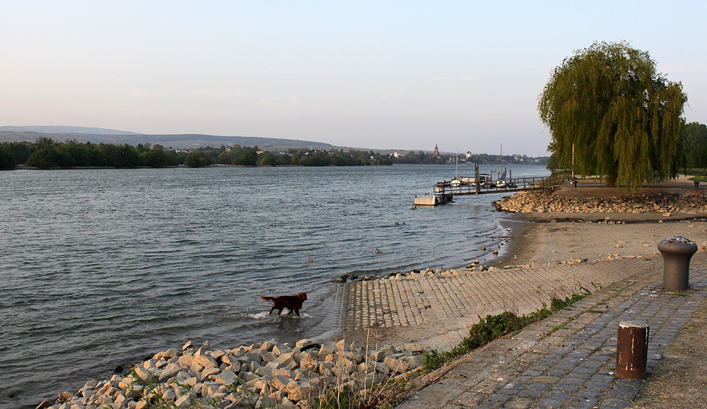 Bild mit Hund