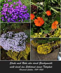 Bilder aus meinem Garten