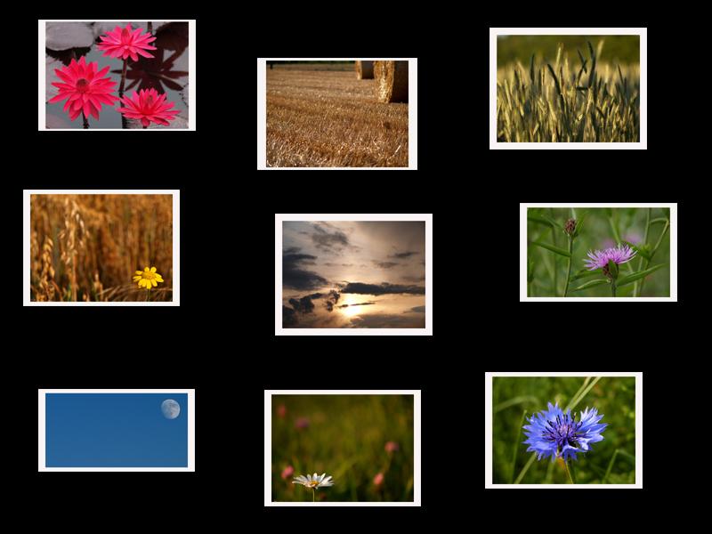 Bilder eines Sommers
