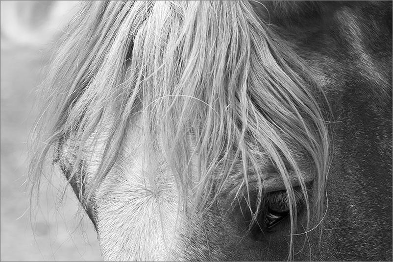 Bilder vom Pferd sw II