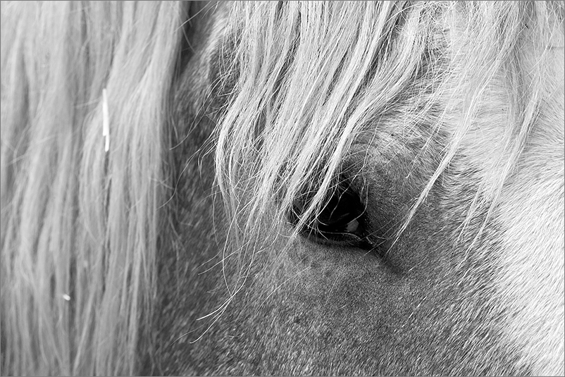 Bilder vom Pferd sw III