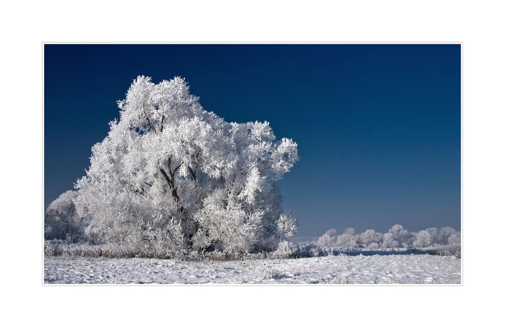 Bilderbuch-Wintertag