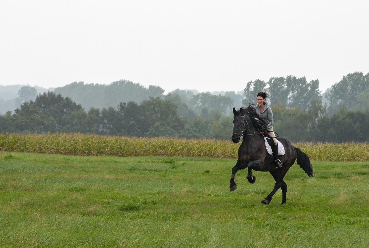 Bildserie: Mensch und Pferd - 1