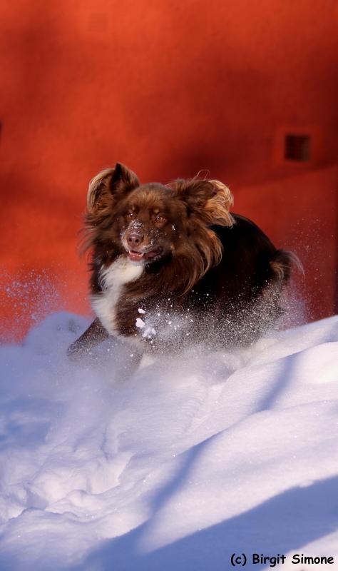 Billy liebt den Schnee!!