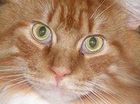 Billycat