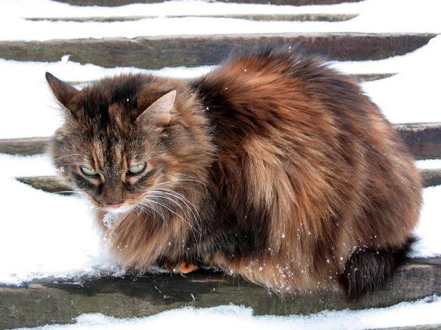 Bimbi im Schnee