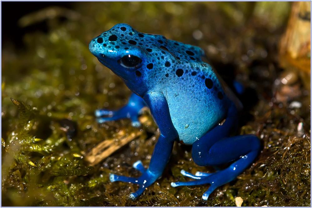 bin blau