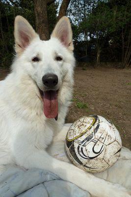 bin ich fertig...meinen Ball gebe ich trotzdem nicht her :-P
